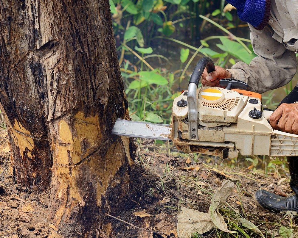 Tree Service Richmond - Tree Removal