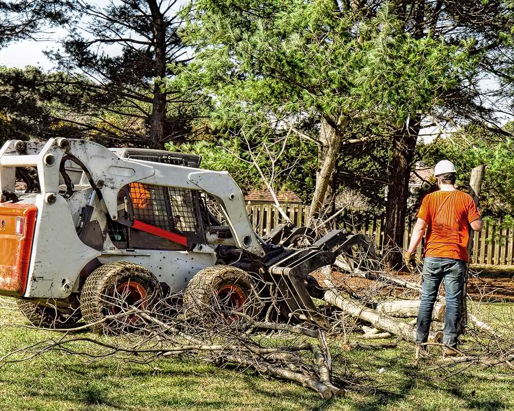 Tree Service Richmond - Arborist