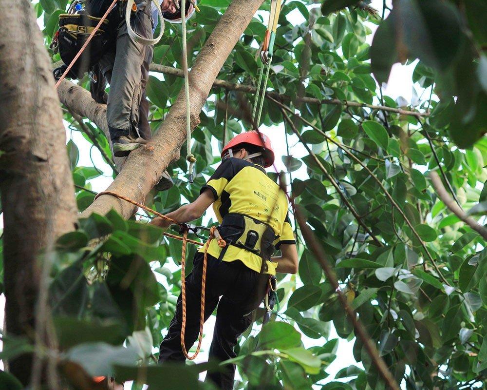 Lexington Tree Experts