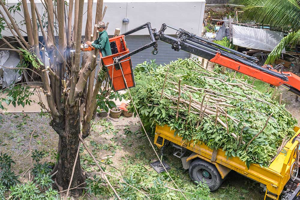 Tree Service Richmond - Tree Pruning