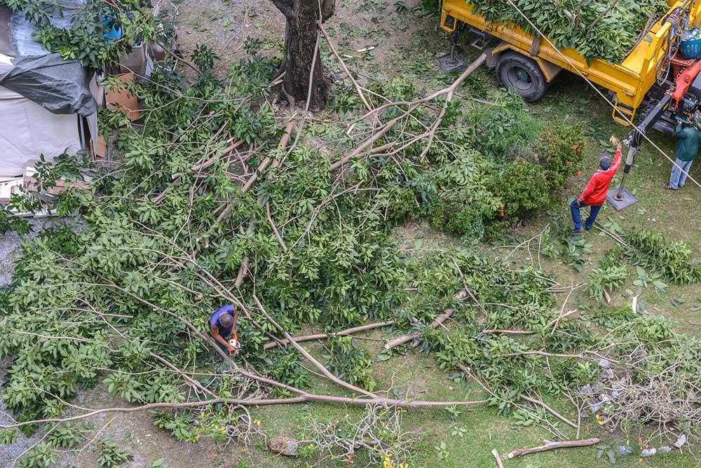 Tree Service Richmond - Tree Trimming